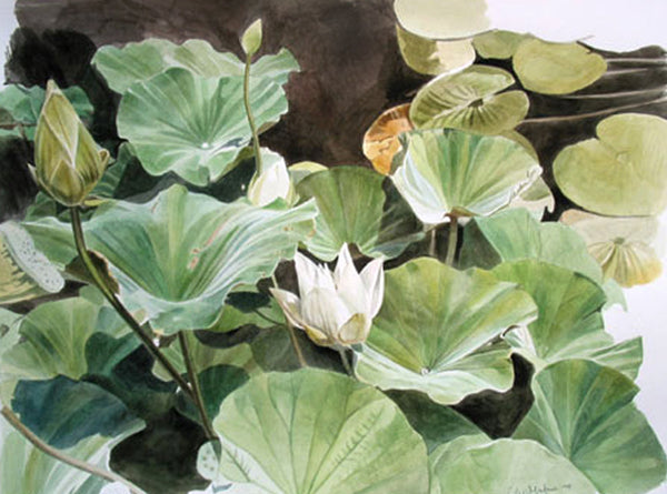 Lotus Pond watercolor Painting by Leslie Montana