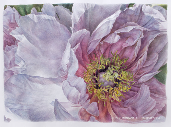 Peony Wings watercolor painting by Leslie Montana