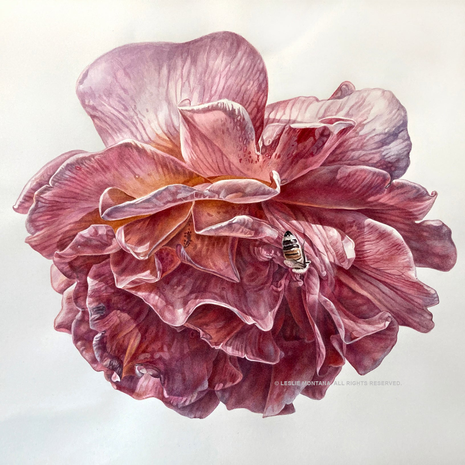 Pink Rose Blossom, Visual Flower Essence, Watercolor Painting