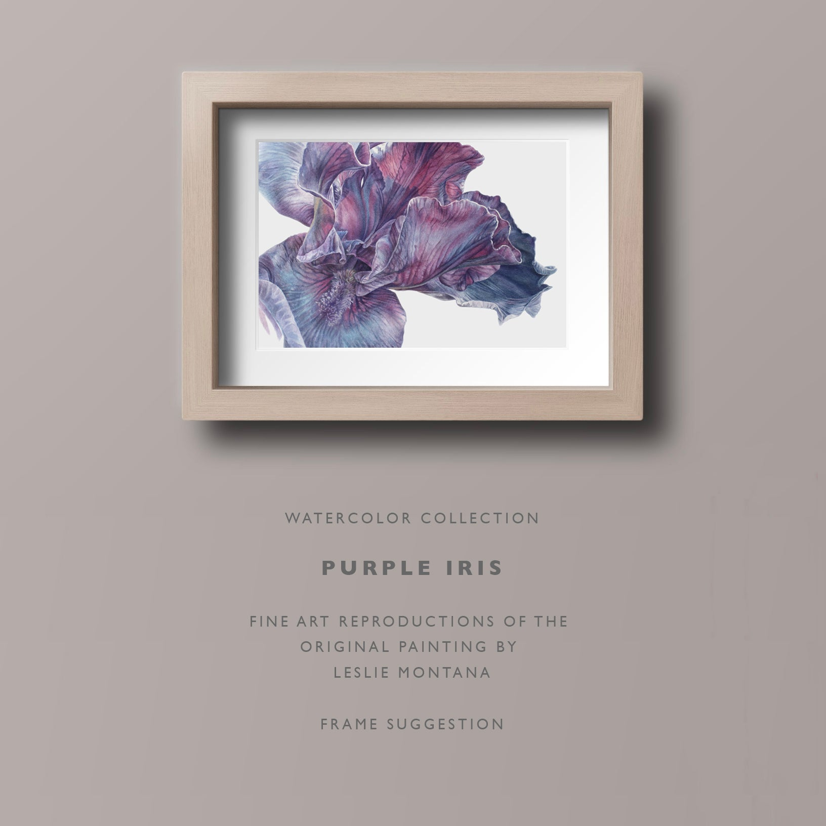 Shop Purple Iris watercolor reproductions, fine art prints by Leslie Montana