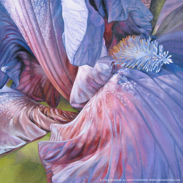 Rainbow Iris oil painting by Leslie Montana