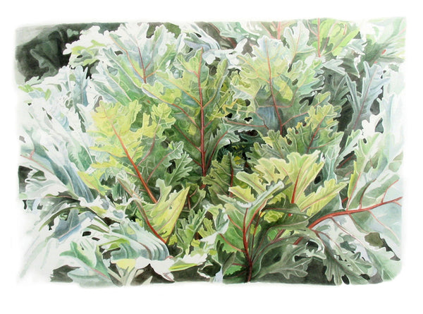 Russian Feather Kale watercolor painting by Leslie Montana