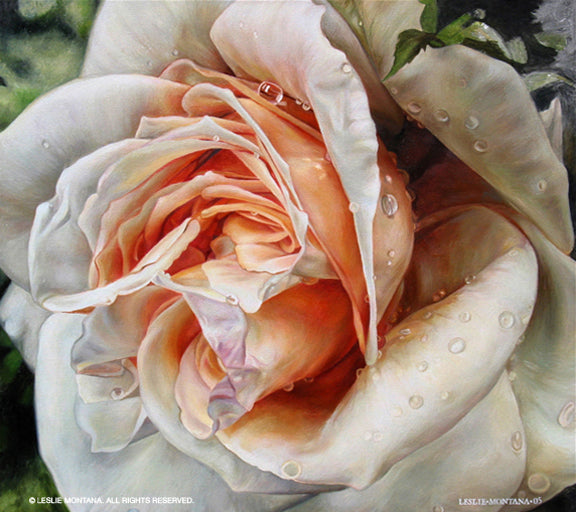 Salmon colored rose oil on canvas by artist Leslie Montana