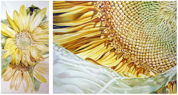 Sunflower Studies in oil on canvas by Leslie Montana