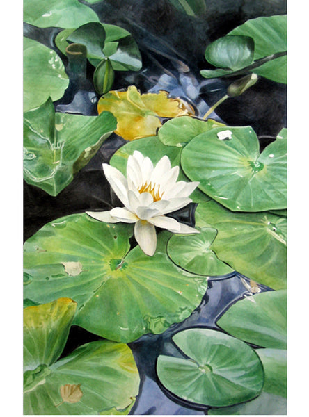 White Lotus - White Water Lily watercolor painting by Leslie Montana