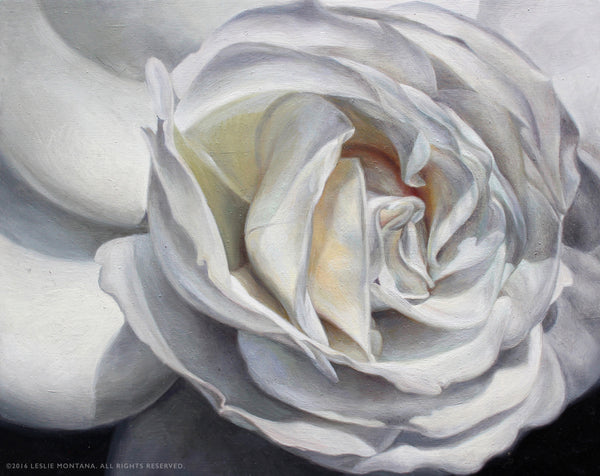 White Rose oil painting on birch panel by Leslie Montana