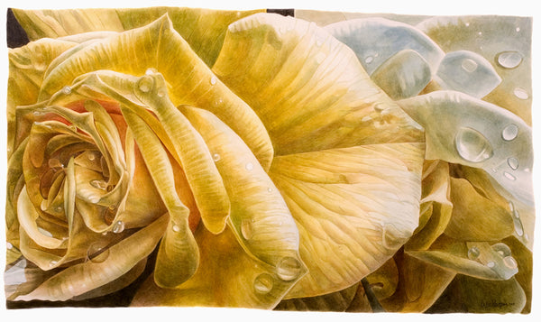 Yellow Rose in Rain watercolor painting by Leslie Montana