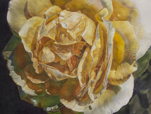 Yellow Rose Supernova watercolor painting by Leslie Montana