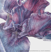 Load image into Gallery viewer, PURPLE IRIS, Giclee Print of the Original Watercolor Painting - Leslie Montana