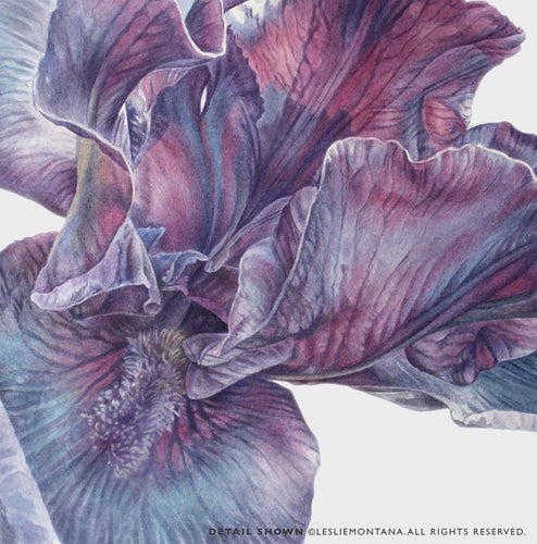 PURPLE IRIS, Giclee Print of the Original Watercolor Painting - Leslie Montana