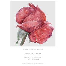 Load image into Gallery viewer, REDDEST ROSE, Giclee Print of the Original Watercolor Painting - Leslie Montana