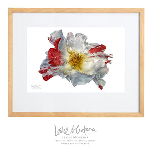 White & Red Striped Rose, Giclee Print of the Original Watercolor Painting, 20 x 30 Inches - Leslie Montana