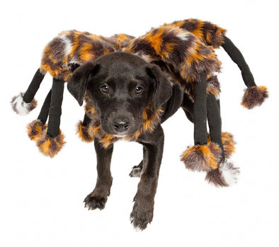 Pet Krewe Spider Dog Costume