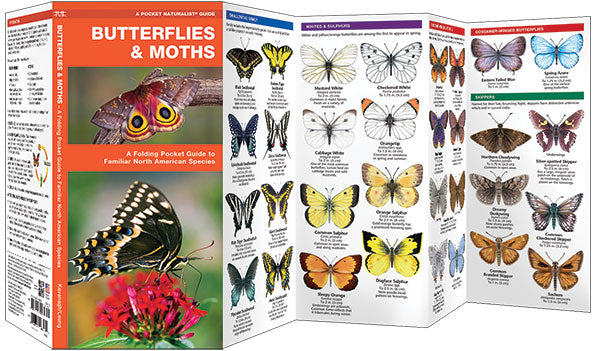 Butterflies & Moths Pocket Guide