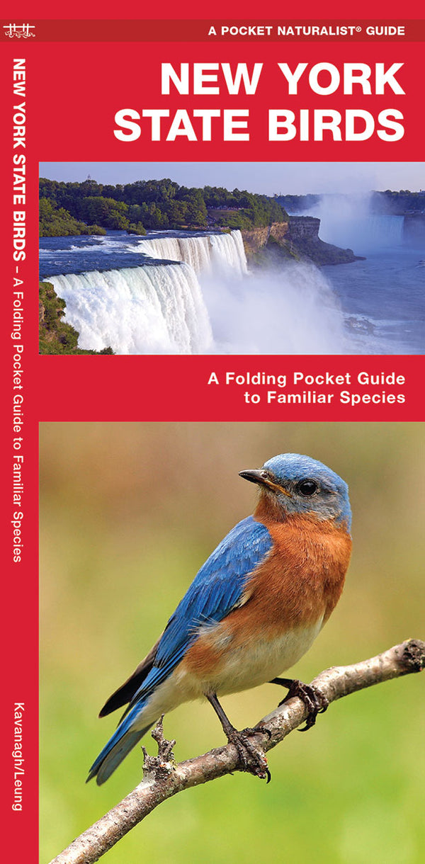 New York State Bird Pocket Guide