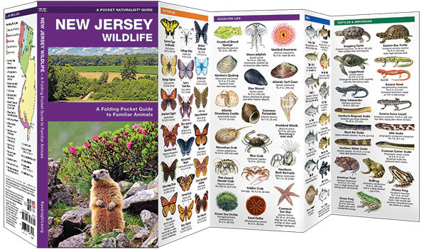 New Jersey Wildlife Pocket Guide