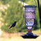 Classic Brands Jewel Amethyst Hummingbird Feeder