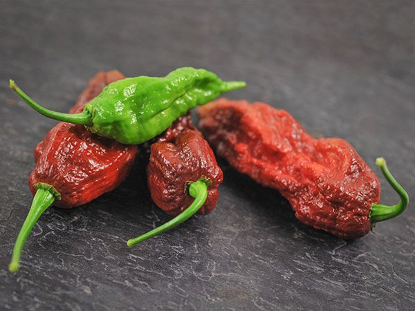 Baker Creek Hot Chocolate Bhut Jolokia Pepper Seed