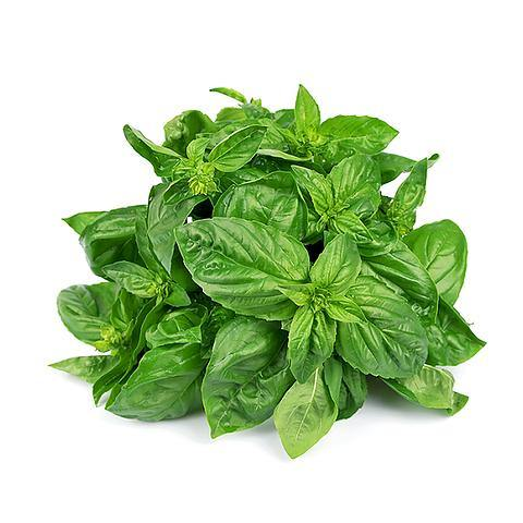 Basil Loose Holland - 2kShopping.com - Grocery | Health | Technology