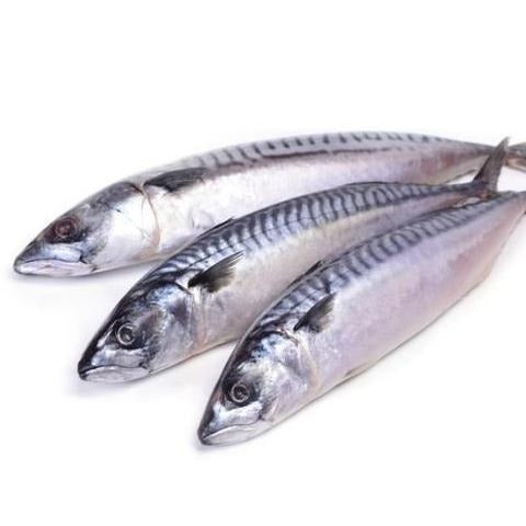 Mackral Fresh Fish  | سمك قرفه فريش - 2kShopping.com - Grocery | Health | Technology