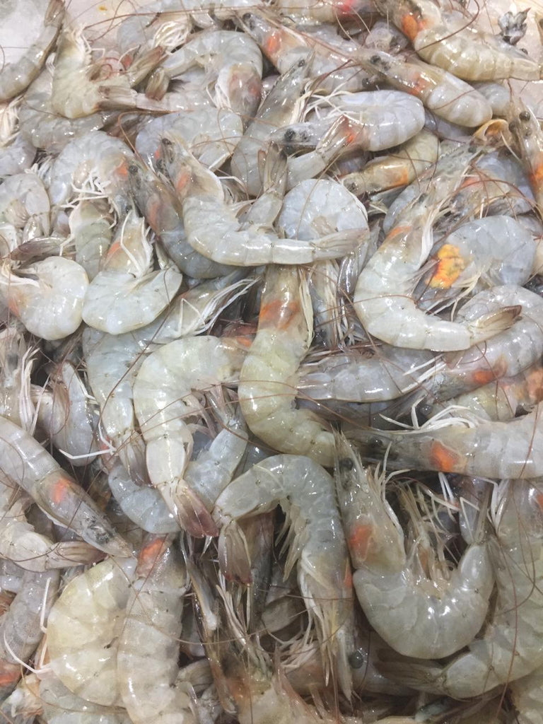 Shrimp Fresh  fish ( 1 kg ) | سمك الروبيان الطازج - 2kShopping.com - Grocery | Health | Technology