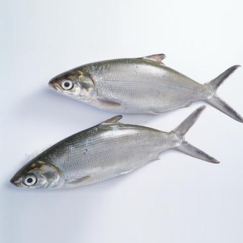 silver milkfish Fresh Fish | السمكة الفضية - 2kShopping.com - Grocery | Health | Technology