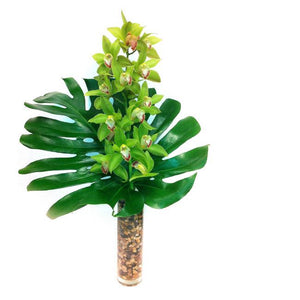 Tropical Green Orchids