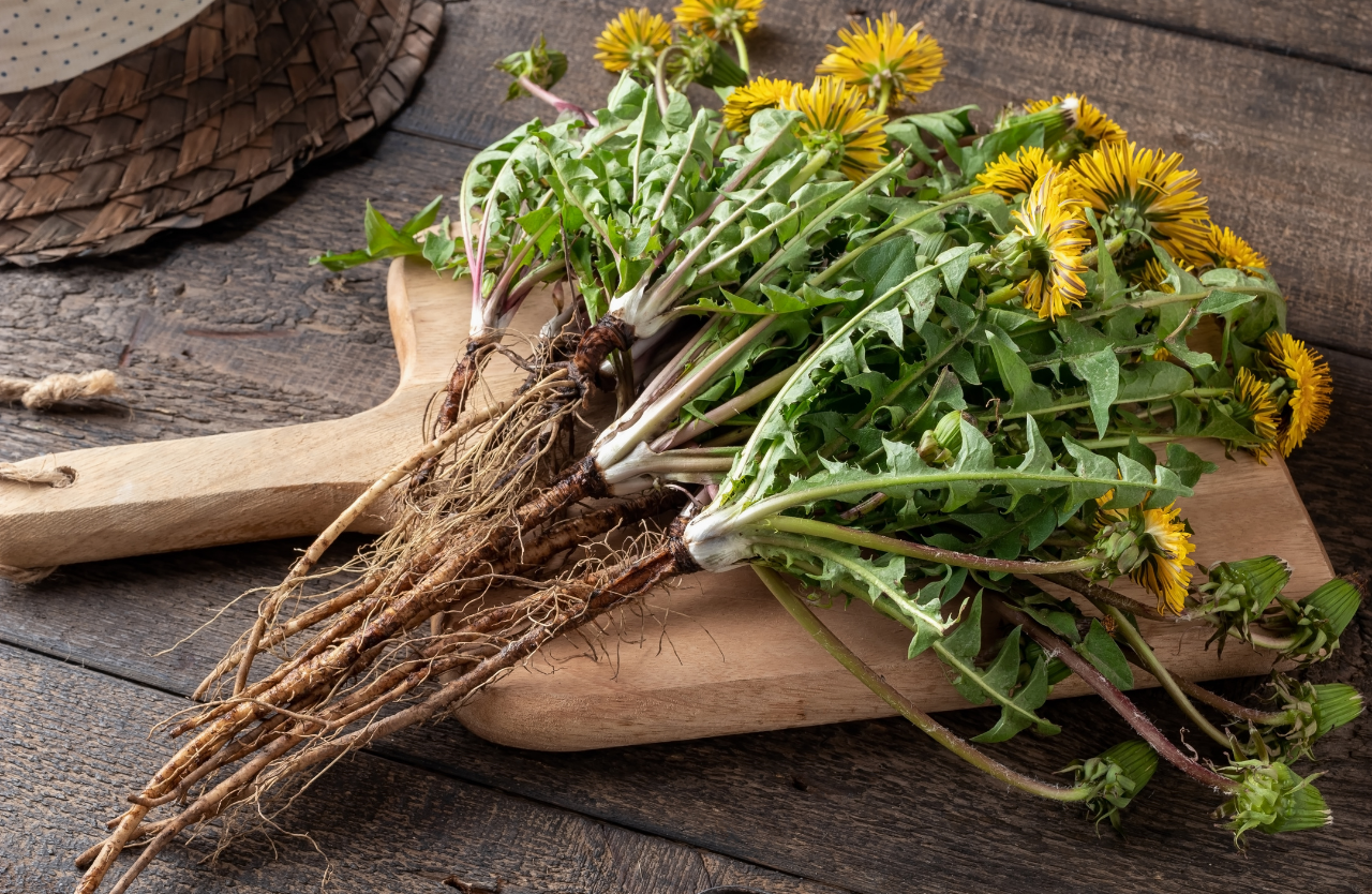 dandelion-root-benefits