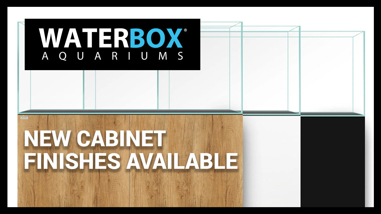 New Cabinet Finishes Available for Cube, Marine AIO, Marine and Clear Aquariums