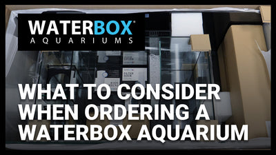 What to Consider When Ordering a Waterbox Aquarium.