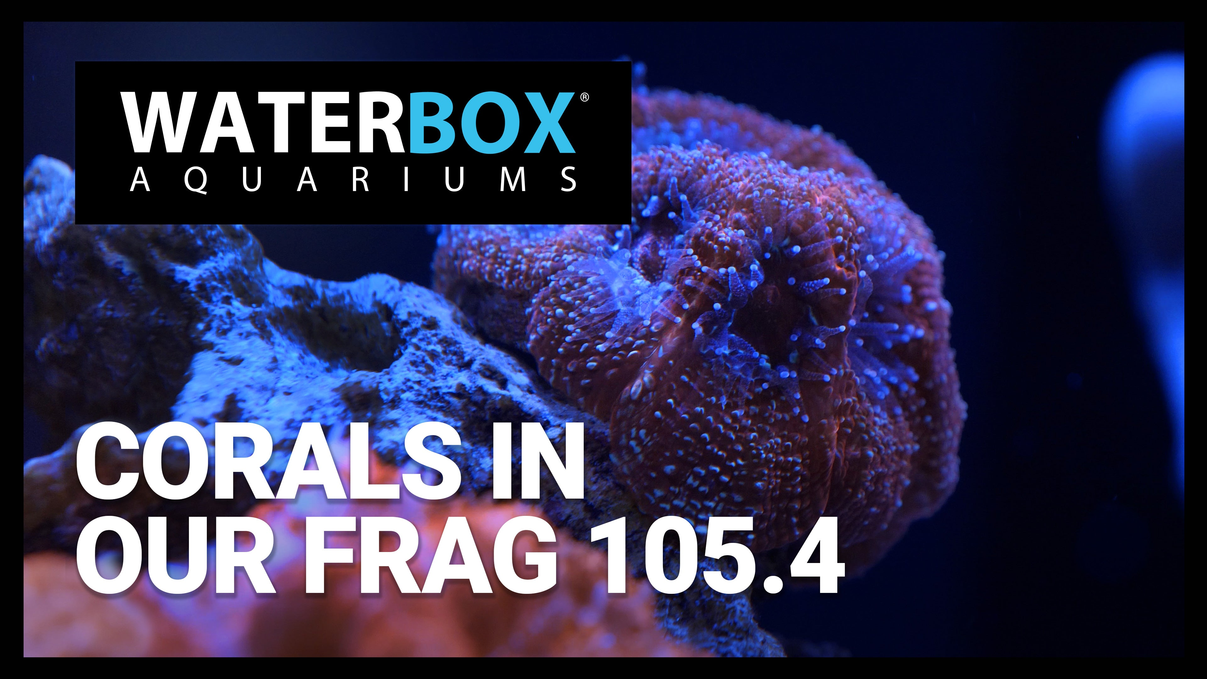 Corals in our FRAG 105.4