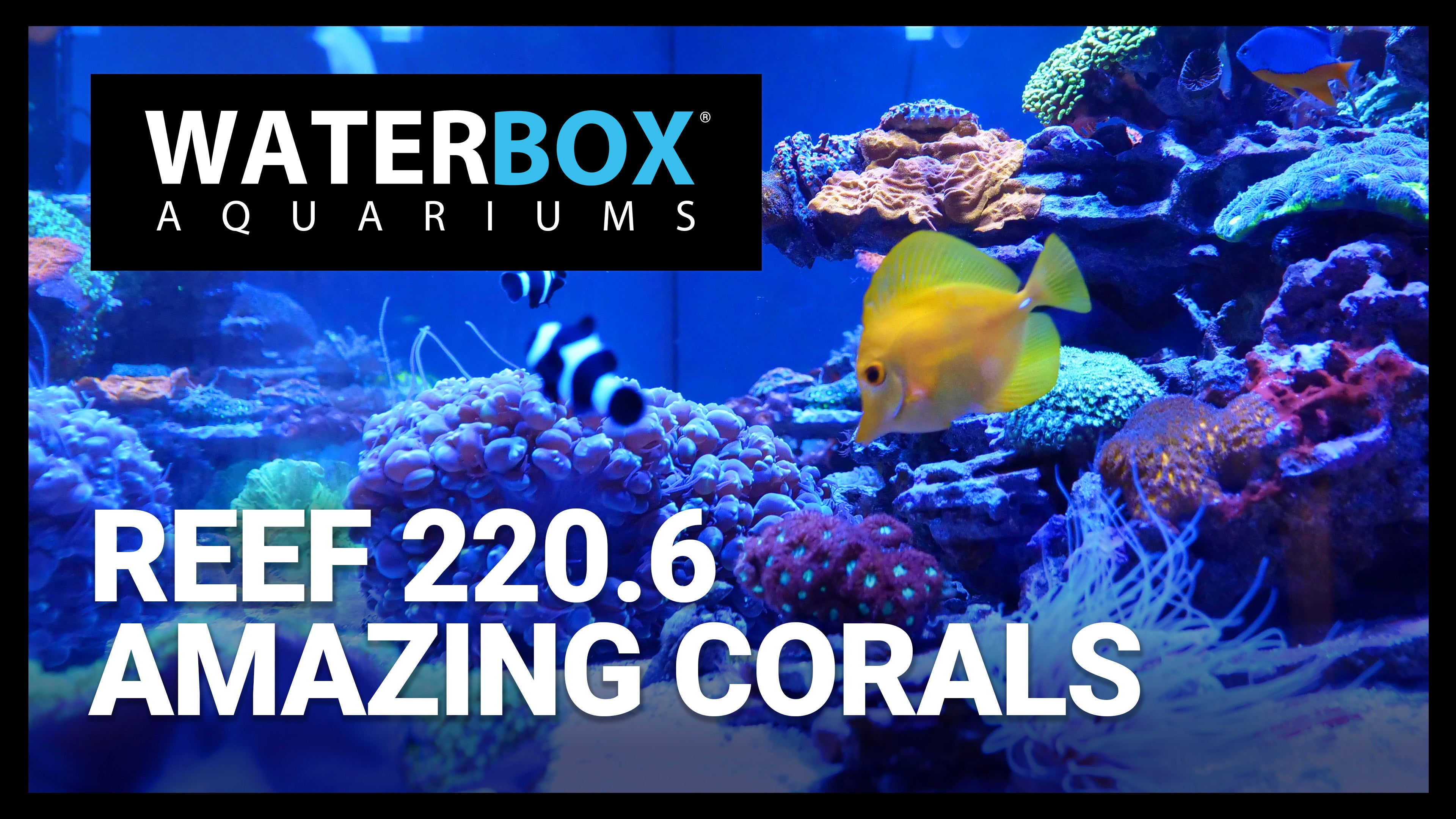 Growing Corals in the REEF 220.6