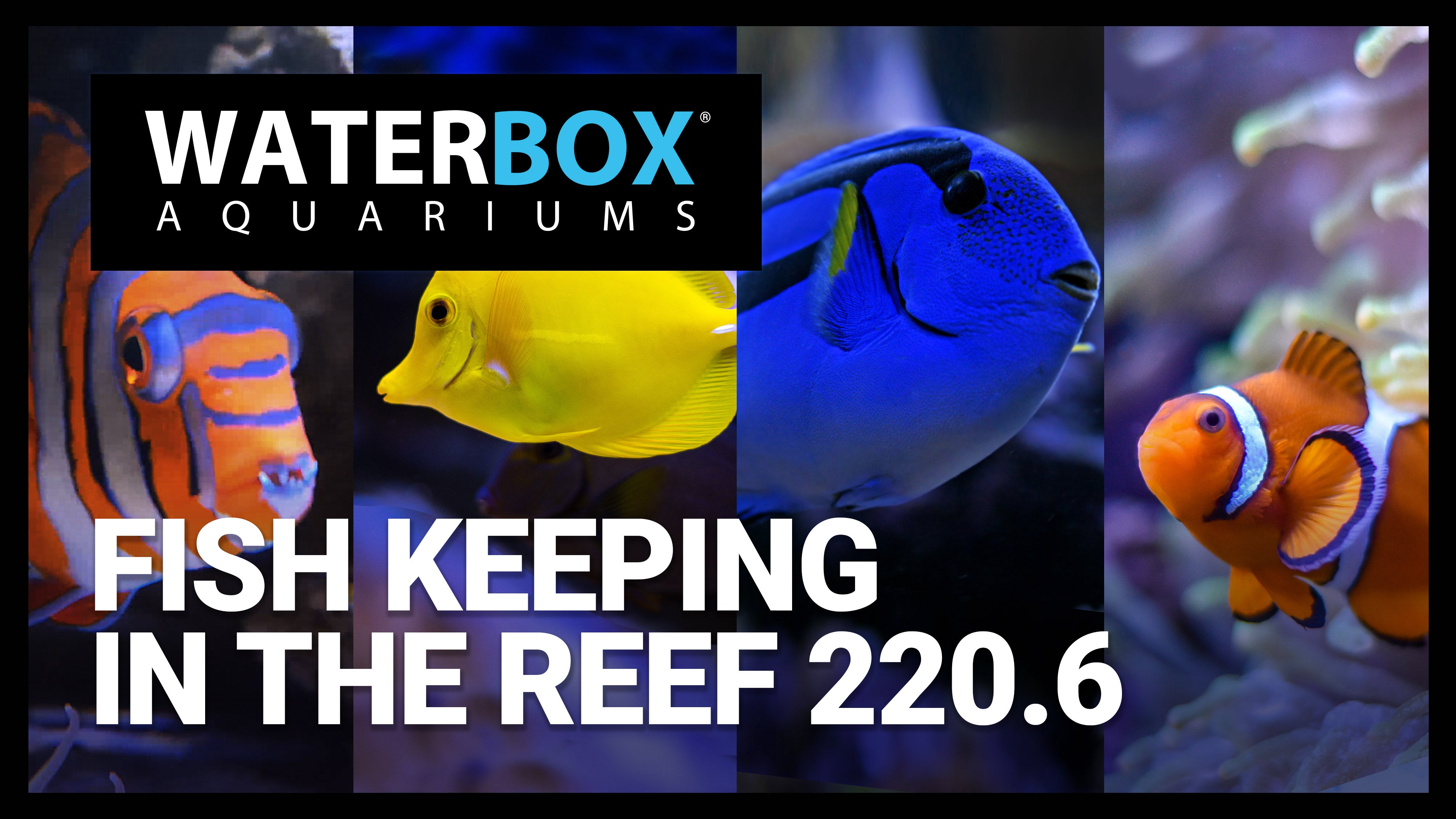 Fish Keeping in the REEF 220.6