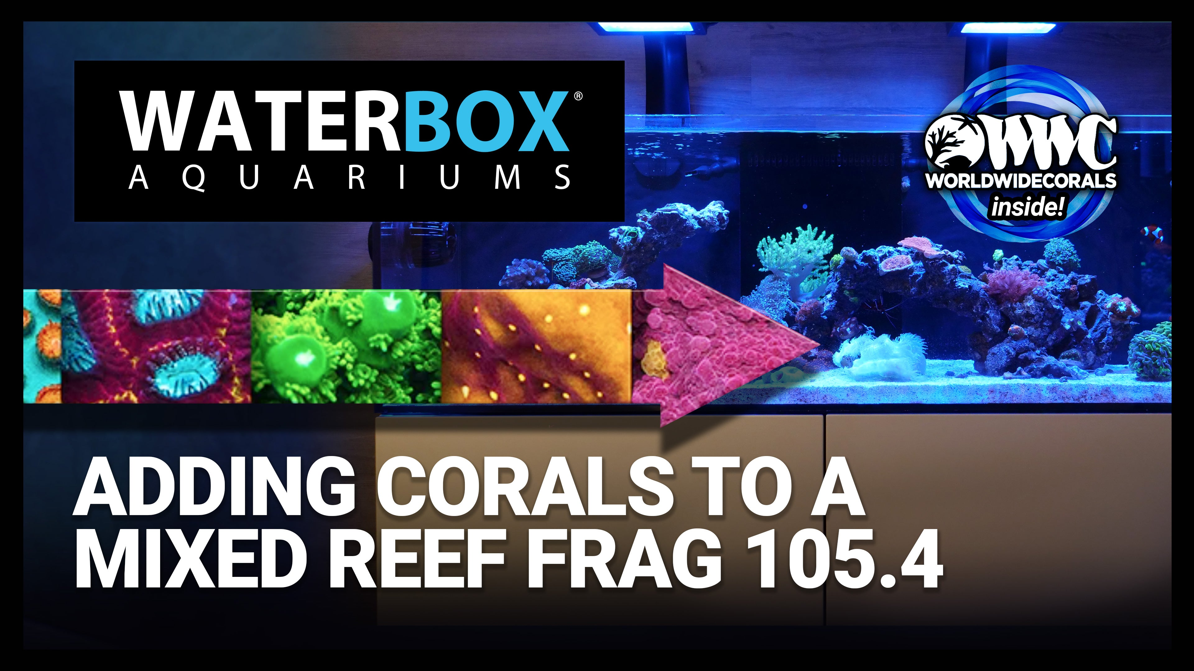 Adding Corals to a Mixed Reef FRAG 105.4