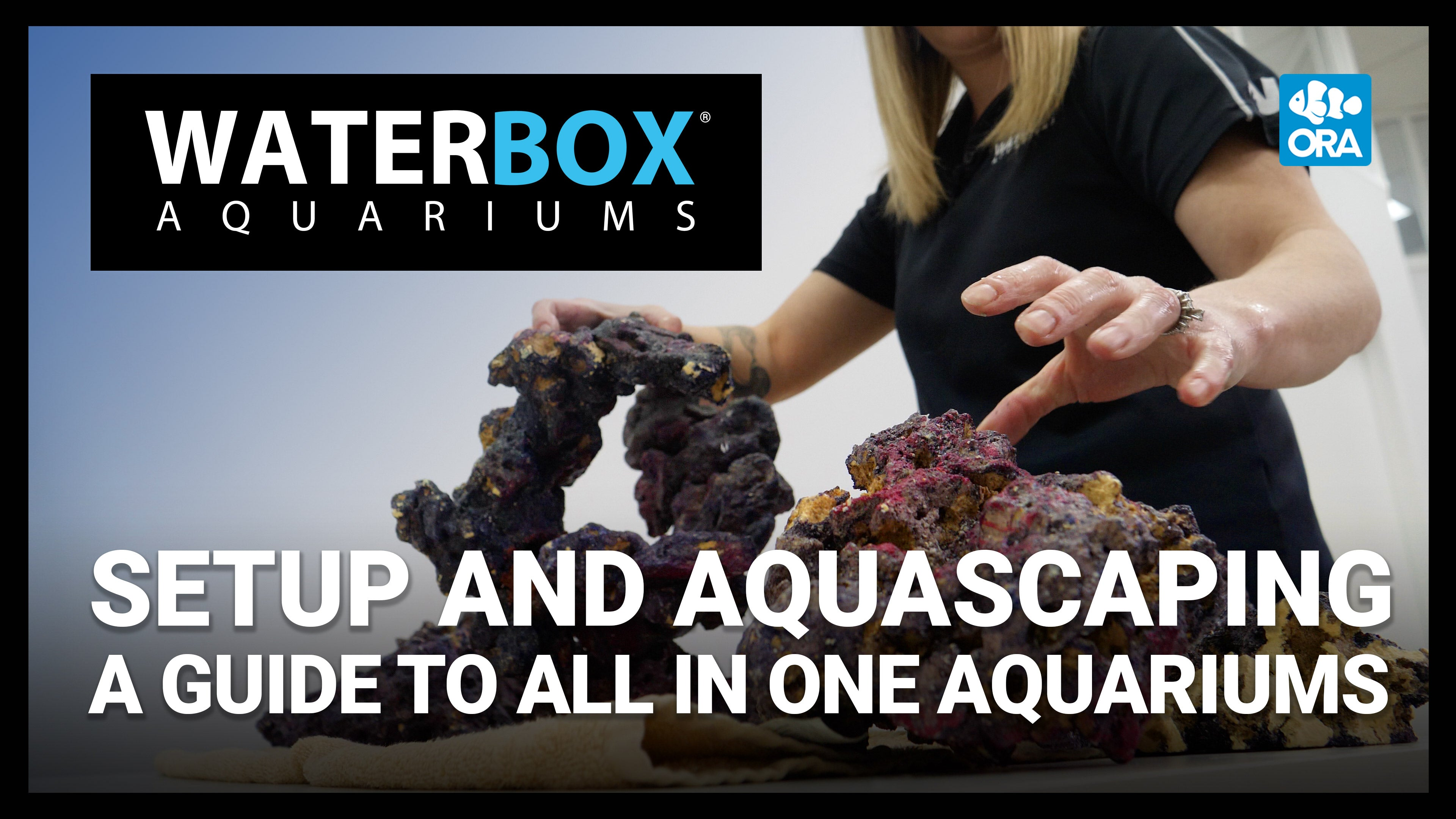 Setup and Aquascaping  |  A Guide to All In One Aquariums