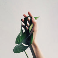 Minimalist natural inspiration of hand and leaf