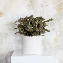 "Load image into Gallery viewer, Fittonia ""Nerve Plant"""