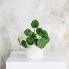 Load image into Gallery viewer, Pilea Plant