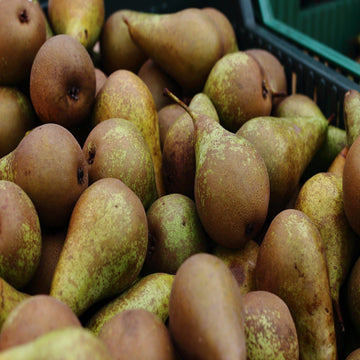 Pears (Pack of 4)