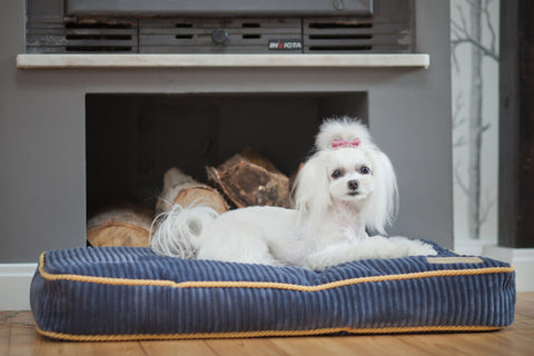 Dog Cushion Bed - 10 Varieties