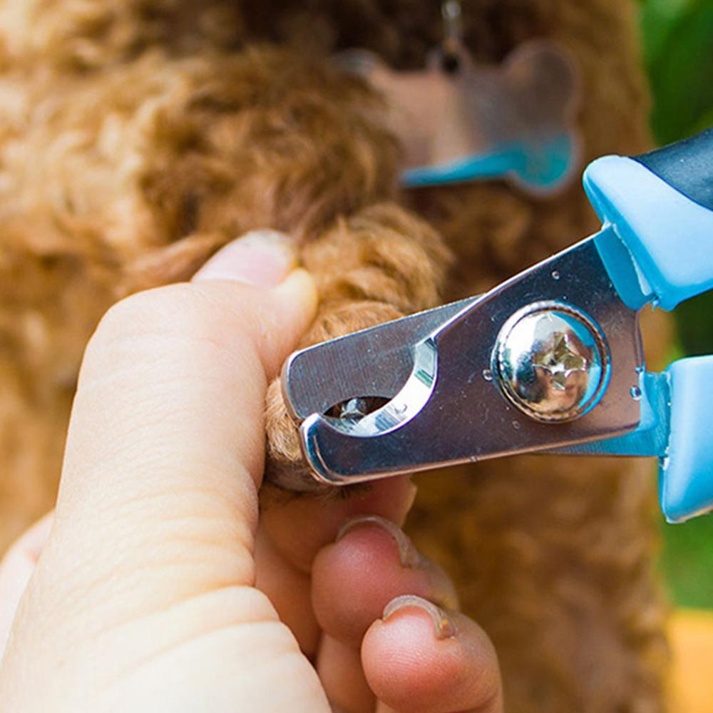 Stainless Steel Nail Clippers - Pampered Paws.shop