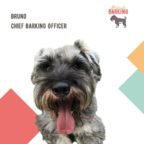 Private Barking's CBO (Chief Barking Officer) Bruno
