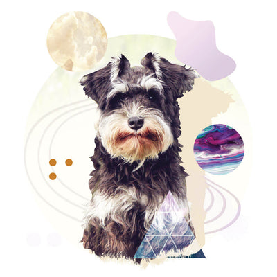 Men's Short-Sleeve Schnauzer Graphic T-Shirt