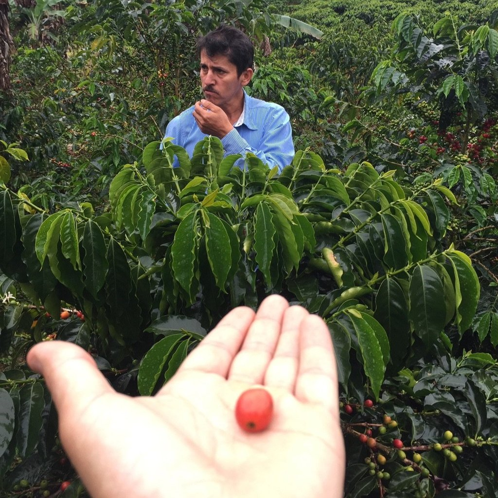 Colombia Luis Anibal Calderon Washed Pink Bourbon