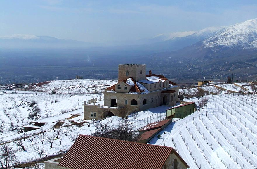 Chateau Khoury's snow-covered organic vineyards perched at 1300 meters of altitude in the Beqaa Valley.