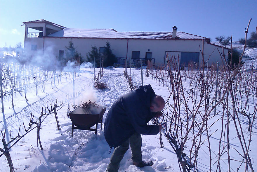 Lauren Hartman pruning the Limniona vines in the biodynamic snow-covered vineyards of Domaine Karanika in Amyndeo