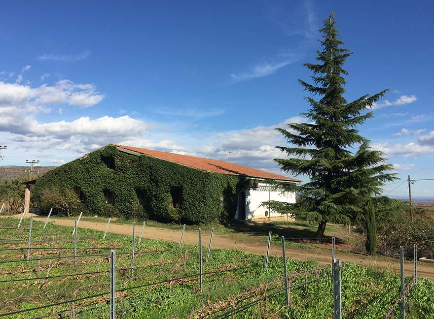 Xinomavro vines next to the plant-covered Markovitis winery in the Greek northern village of Polla Nera in Naoussa.