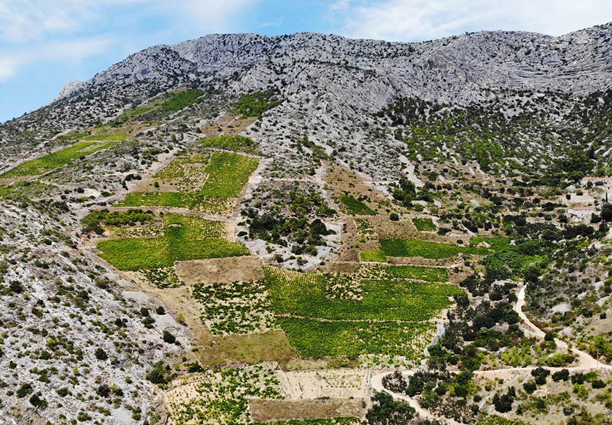 Very steep south facing Plavac Mali vineyards on the rocky soils of Hvar island.