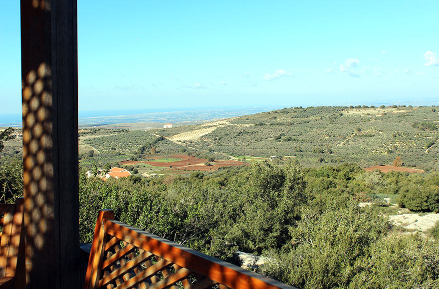 A view on Zejd's organic olive groves in Baino in the North of Lebanon. All trees are from the indigenous Souri variety.