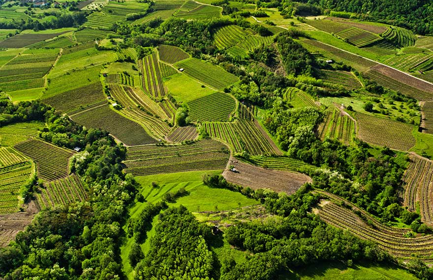 The lush green rolling hills of the Vipava Valley stretching between patches of vineyards and wild trees.